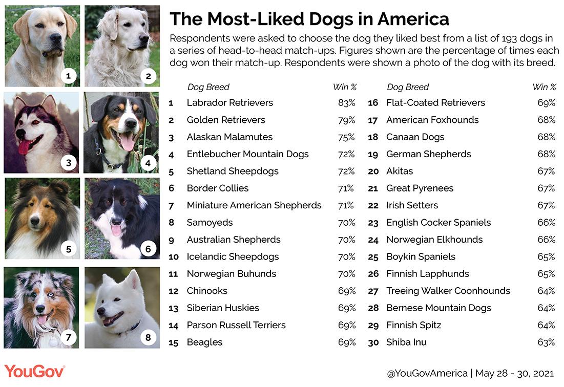 America's favorite dog breeds
