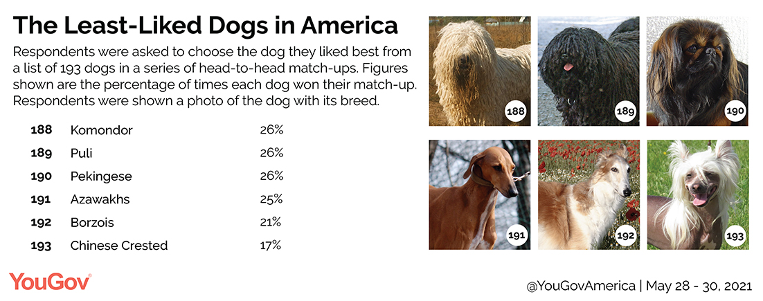 America's least favorite dog breeds